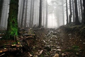 droga kamienista w lesie